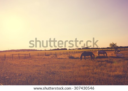 Horses on the Pasture - stock photo
