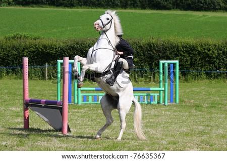 Horses races - stock photo