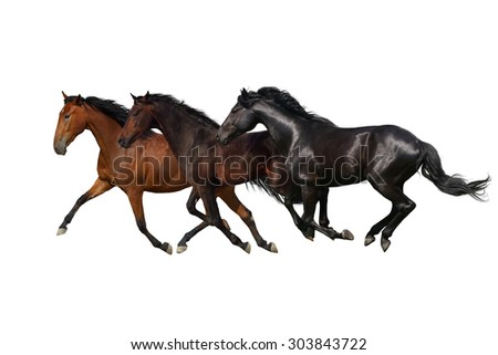 Horses run gallop and trot isolated on white background