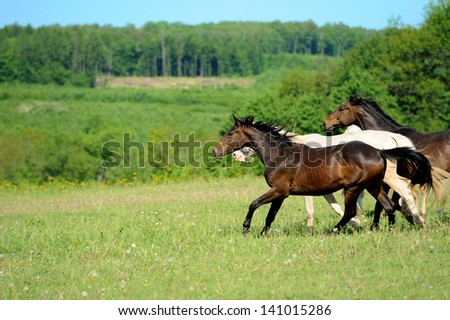 Horses run on field in summer