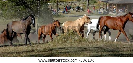 Horses running across with cookout in background - stock photo