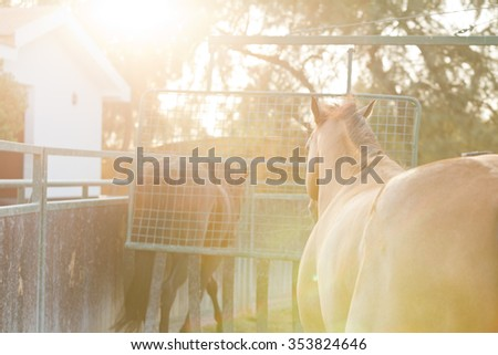 Horses running in a hazy sunset with soft lens flare - stock photo