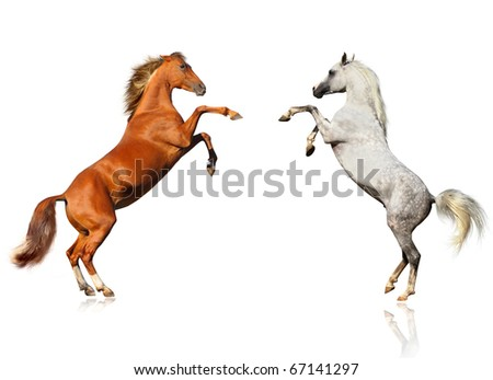 horses sighting - stock photo