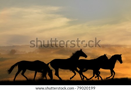 horses silhouettes in sunset - stock photo