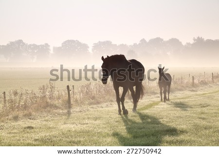 horses walk on misty pasture at sunrise - stock photo