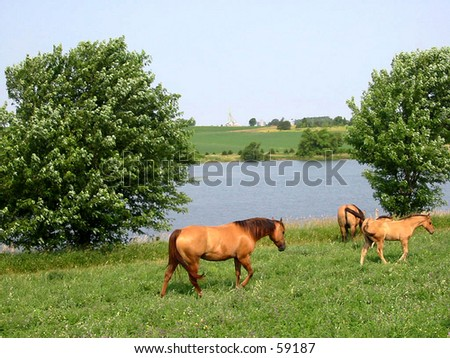 Horses walking near a pond in the summertime - stock photo