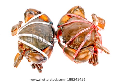 Horseshoe crab in isolated on white background