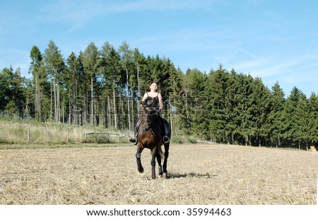 Horsewoman rides a horse across the field. Hanoverian . - stock photo