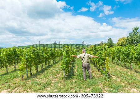 Horticultural engineer measuring the distance between rows in grape vine field. - stock photo