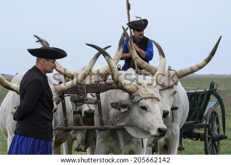 HORTOBAGY, HUNGARY - CIRCA APRIL 2014 - Hungarian Csikos or herdsmen with Traditional Hungarian Grey Steer