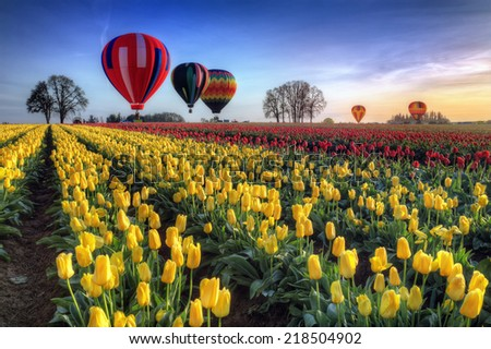 Hot air balloons over tulip field at dawn - stock photo