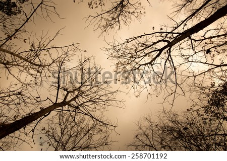 Hot and dry forest tree silhouettes