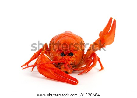 Hot boiled crayfish say hello on white background - stock photo