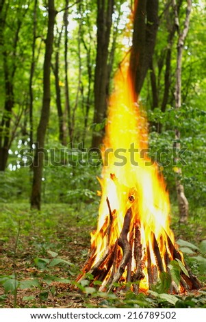 hot flame of campfire in forest