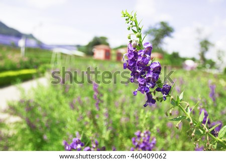 Hot Herb Park Green Grow Seed Down Sky Rural Alive Day Cool Yard Farm Clear Plant Lovely Shiny Flora Color Light Calm Grass Many Floral Field Pollen Nature Bloom Marm Leaves Flowers Flowering  - stock photo