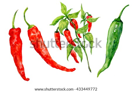 hot red chili pepper .illustration of watercolor.natural products fresh vegetables