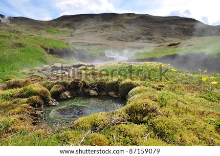 Hot spring area with yellow flowers, Iceland - stock photo