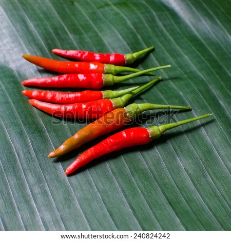 Hot Thai Red Chili Peppers, Guinea-pepper,Chilli Padi, Bird's Eye Chilli, Bird Chilli,  Chilly, Spicy food must have - stock photo