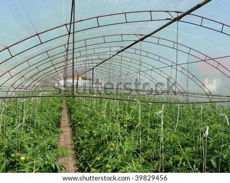 Hotbed with young plants - stock photo