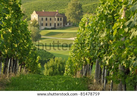 House among the vineyards in summer. Škalce, Slovenske Konjice, Slovenia - stock photo