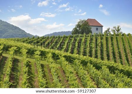House among the vineyards in summer.Slovenske Konjice, Slovenia - stock photo