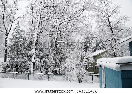 house and back yard tree after snow - stock photo