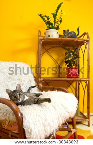house cats on an armchair - stock photo