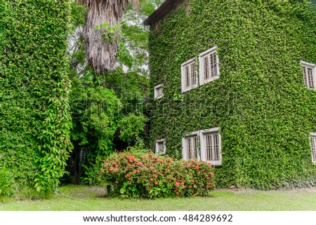 House covered with green ivy background.