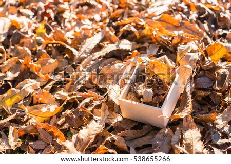 House filled with fallen leaves