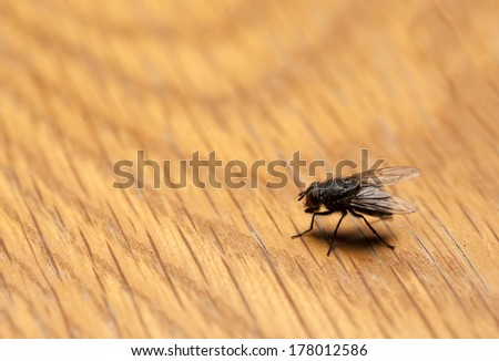 House fly on wood background - stock photo