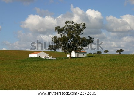 House in Alentejo with tree