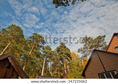 House in the summer forest - stock photo