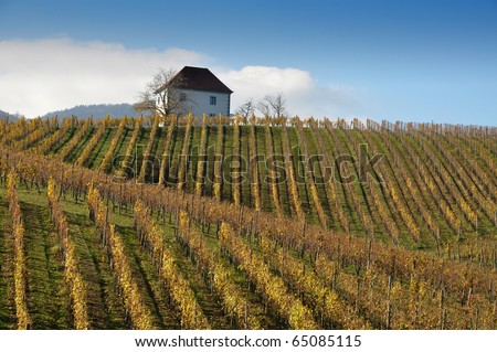 House in the vineyards in autumn. Skalce, Slovenske Konjice, Slovenia - stock photo