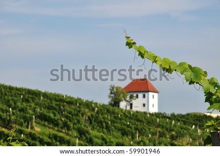 House in the vineyards in summer. Skalce, Slovenske Konjice, Slovenia - stock photo