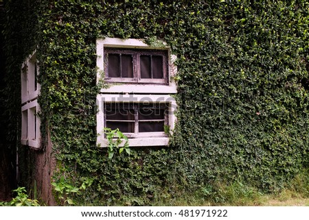 house is overgrown with ivy.