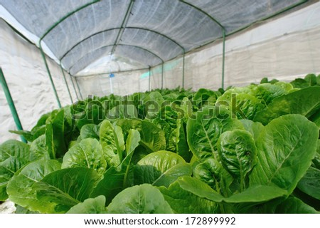 House of vegetable without soil - stock photo