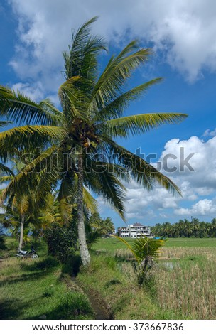 House on rice fields at the town of Ubud in Bali in sunny summer day - stock photo