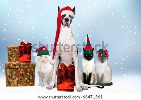 House pets aDorned with Christmas hats and gifts - stock photo