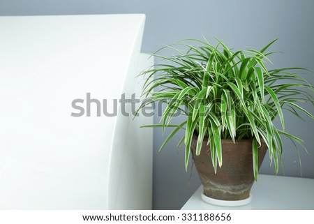House Plant and Home Decoration - Copy Space on Left Area - stock photo
