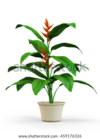 House plant in a flower pot isolated on white background. 3D Rendering, Illustration.