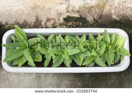 House plant outdoor decoration - stock photo