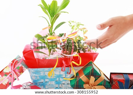 House plant with gift boxes