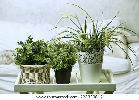 house plants on the white bedroom background - stock photo
