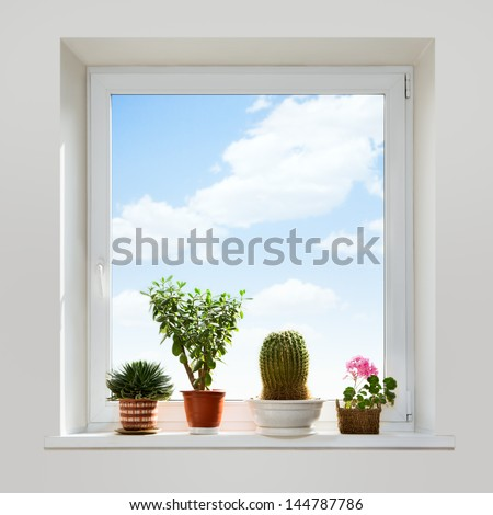 House plants on the windowsill. Spring. - stock photo