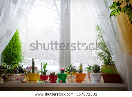 House plants on window - stock photo