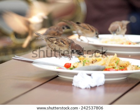 house sparrow standing on dish - stock photo