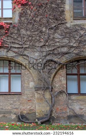House wall with colorful vines and autumn leaves in Germany  - stock photo