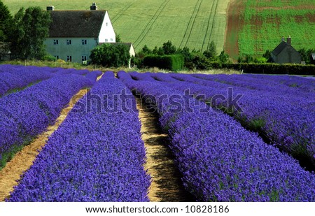 House with Lavender