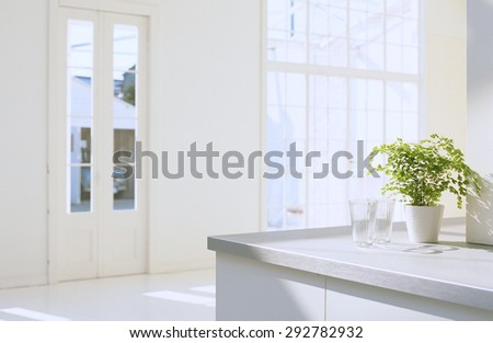 houseplant in contemporary white interior - stock photo