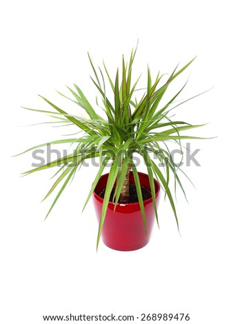 houseplant on a white background - stock photo